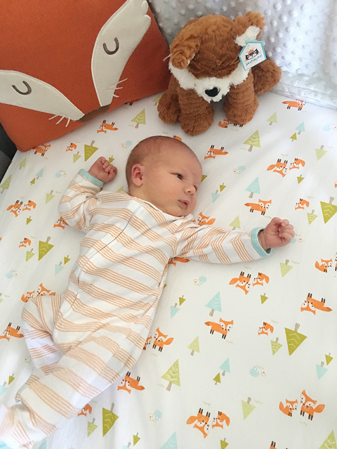 nursery fox theme